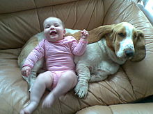220px-basset_hound_with_baby